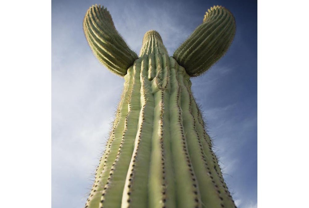 What Do Miracle Truss® Buildings And The Saguaro Cactus Of Arizona Have In Common?