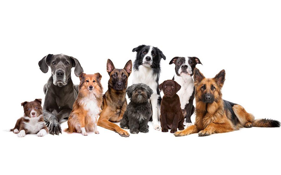 Ready to Run a Dog Kennel?
